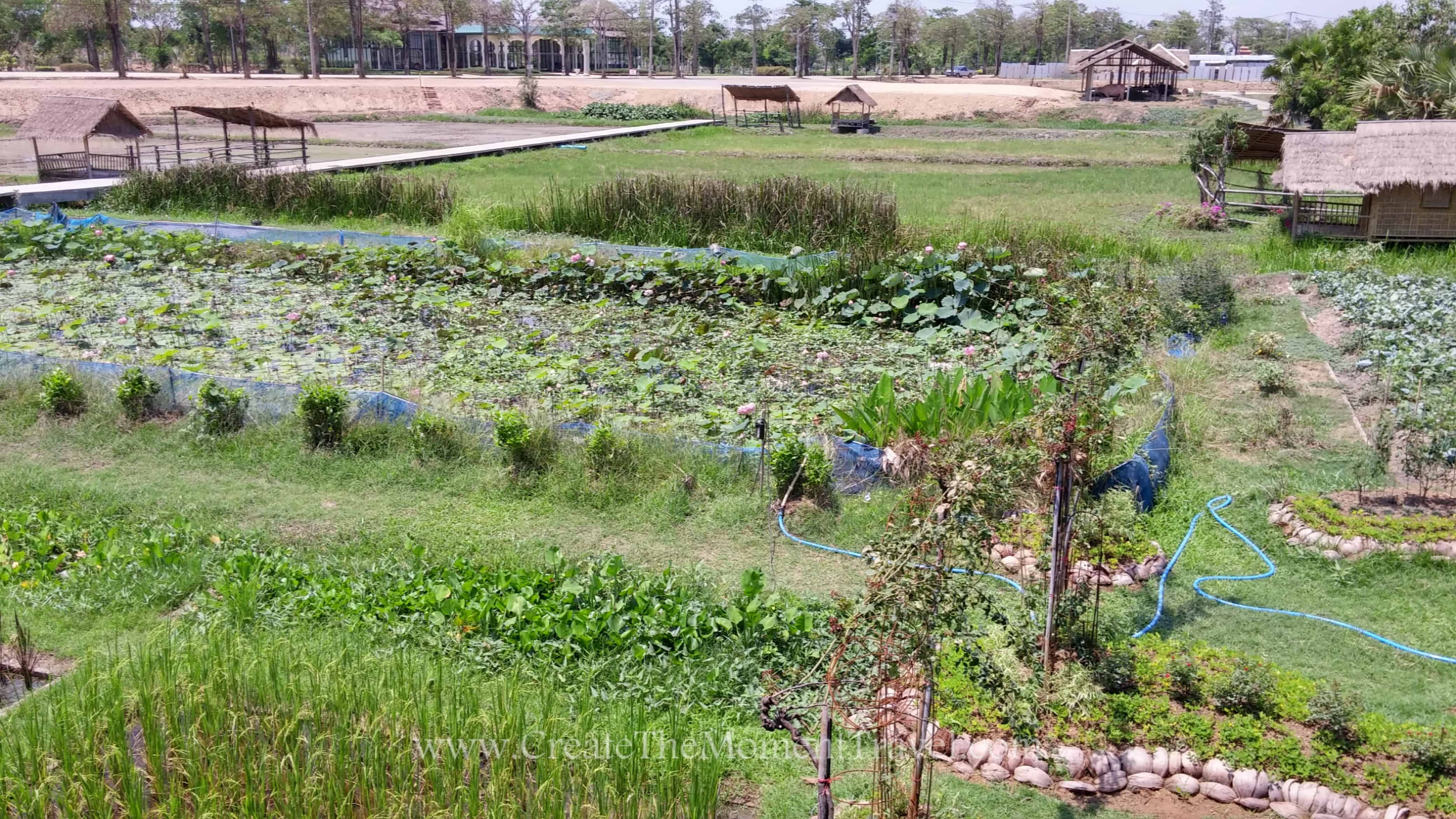Organic Farming in Sukhothai Northern Thailand by Create The Moment Travel