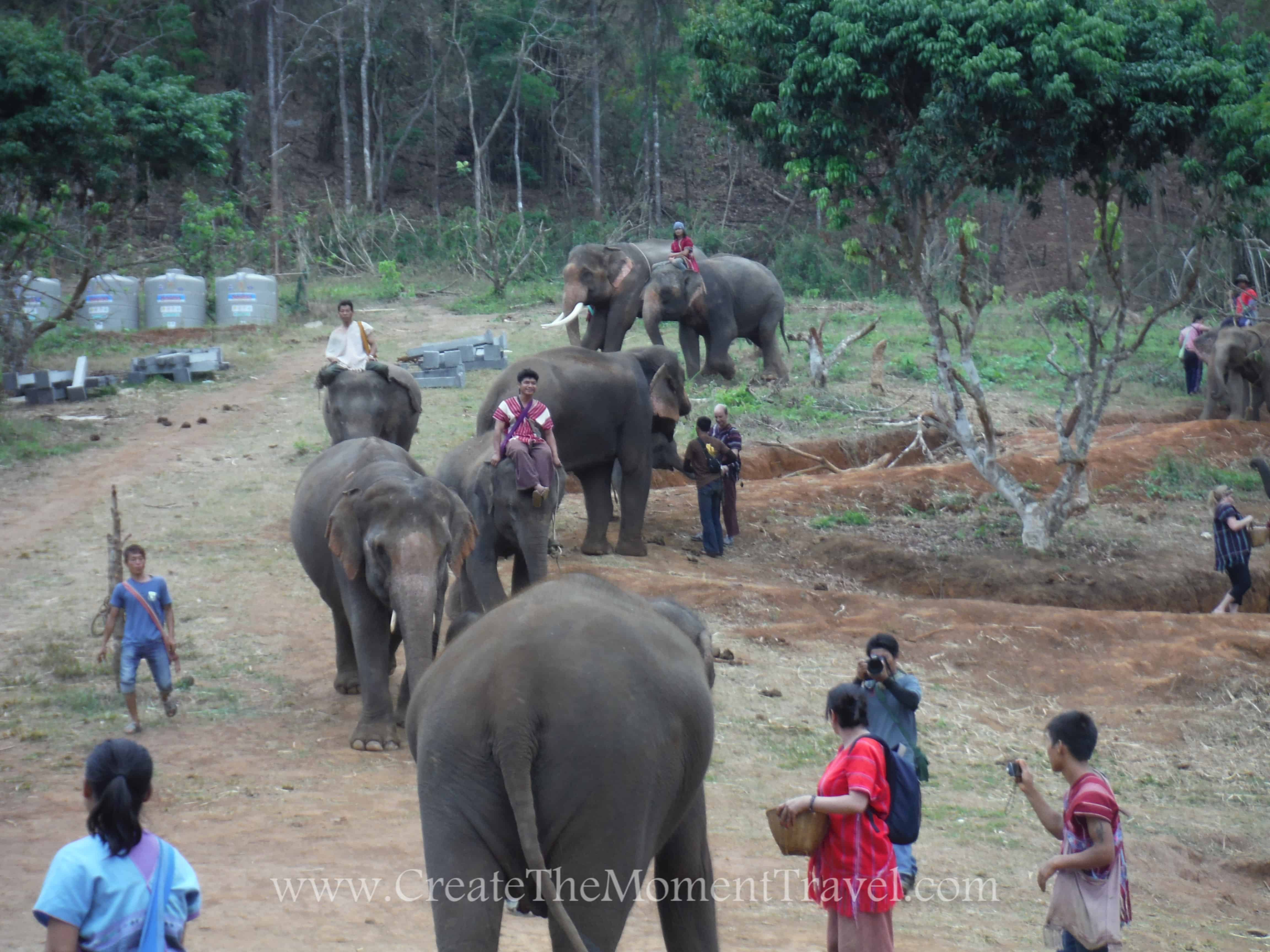 Elephants coming for daily care at Elephant Sanctuary Chiang Mai Thailand by Create The Moment Travel